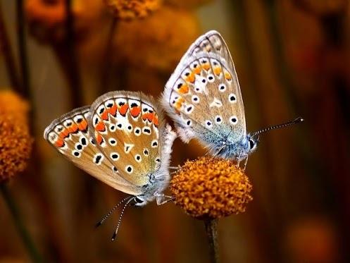 бабочки1